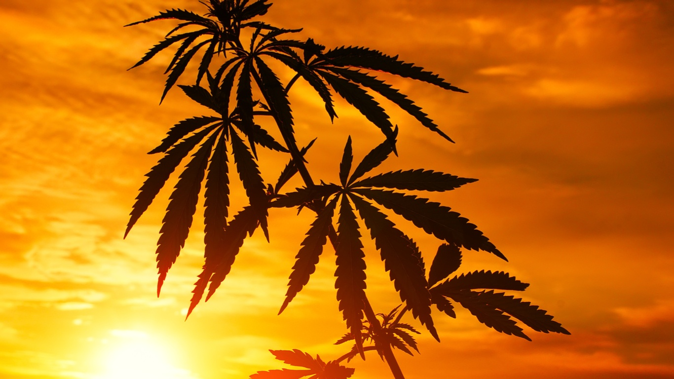 TRUSTcannabis.jpg
